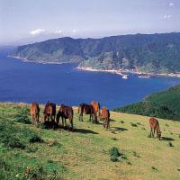 都井岬の観光とアクセス・地図