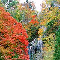 五ヶ瀬町観光の紅葉のおすすめ穴場の見ごろは?