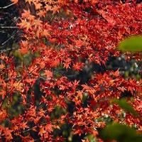 宮崎県南市北郷町猪八重渓谷の紅葉の見頃の時期とアクセス、駐車場は?