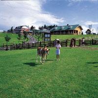 宮崎県観光で子供連れにおすすめ穴場は高千穂牧場
