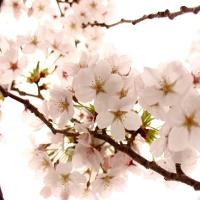 宮崎県の桜の名所のお花見観光はRVパーク利用の車中泊がオススメ