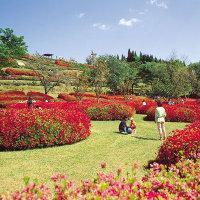宮崎県三股町のつつじの名所の椎八重公園2016年のお花見の開花見ごろ、アクセス、駐車場は?