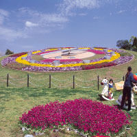 宮崎県の春の観光におすすめ穴場の綾町の綾馬事公苑で桜のお花見はどうですか?