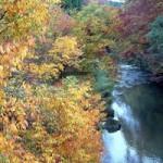 五ヶ瀬町の紅葉の見ごろ時期、白滝もみじ祭 アクセス 駐車場は?