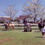 綾町の春の観光は綾馬事公苑の春競馬と山桜のお花見がおすすめ