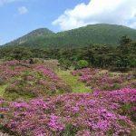 えびの高原ミヤマキリシマのつつじヶ丘、硫黄山周辺の見頃は?