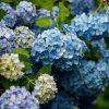 宮崎市パワースポット江田神社の神話観光と紫陽花の見ごろは?