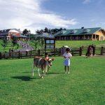 宮崎県観光の子供連れに人気の高千穂牧場周辺のランチと温泉は?